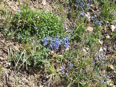 Unusual wildflowers in the valley